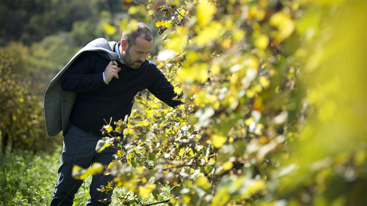 The Duca di Dolle property follows with passion and respect both the vineyard and the production.